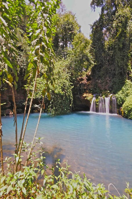 Ngare Ndare forest blue pools